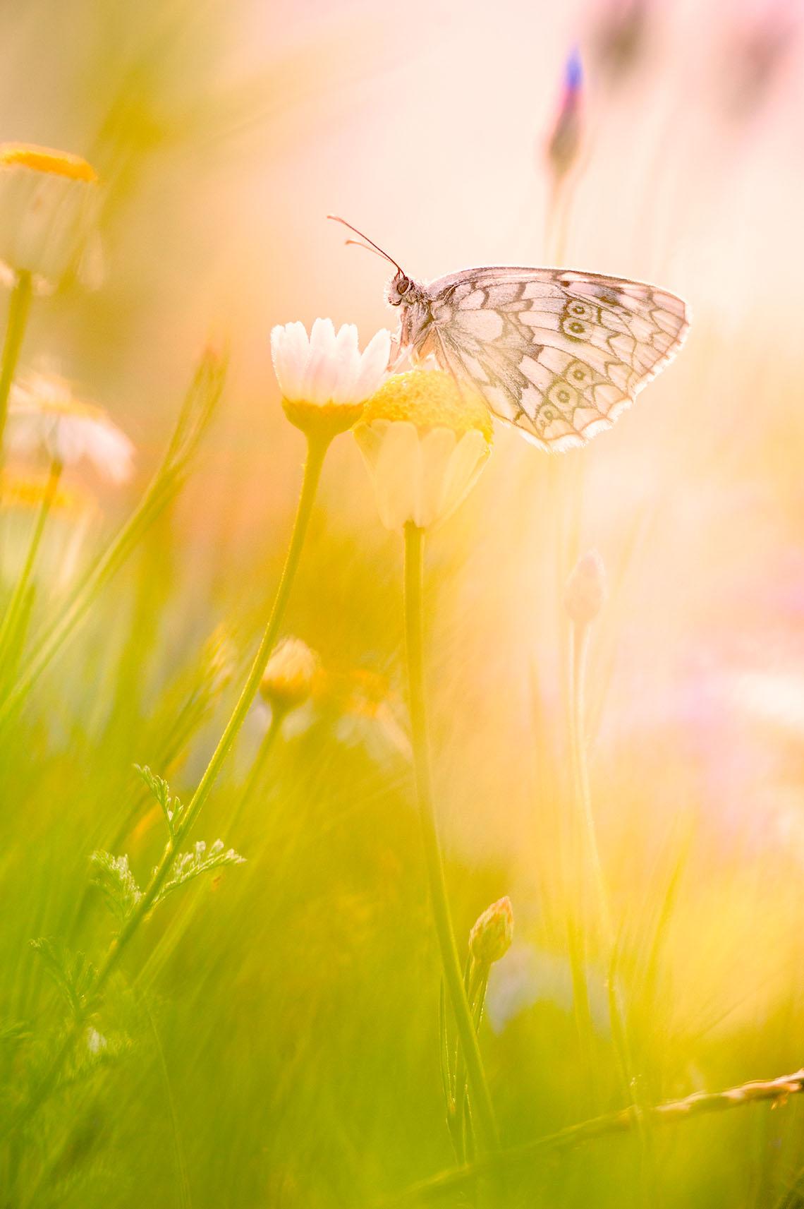 Macro fotografia farfalla su un fiore