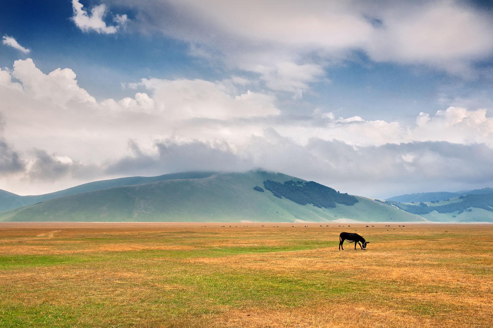 Castelluccio di Norcia Landscape fioritura valle