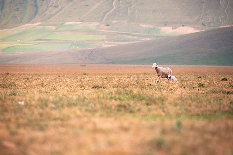 Castelluccio di Norcia landscape e reportage