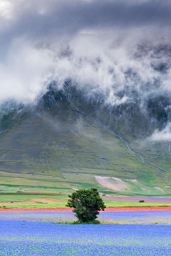 Castelluccio di Norcia Landscape nebbia all'alba